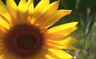 Tema Blommor och Blad