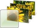Förhandstitt på temat Blommor och Blad