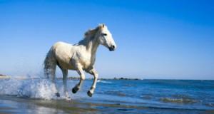 Tema Hästar