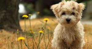 Officiella temat med hundar 1