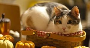 Officiella temat med katter 1