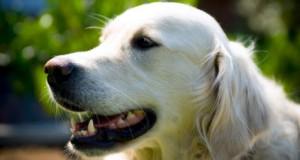 Officiella temat med sommarhundar 1